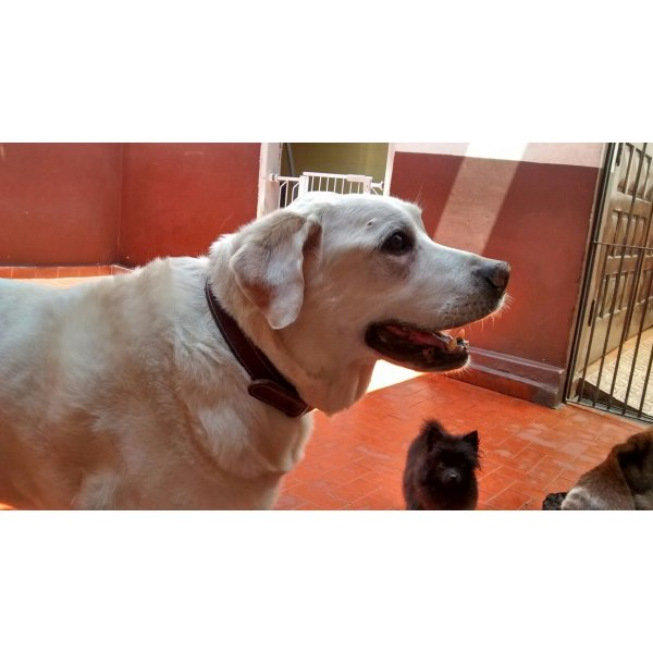 Contratar Serviço Dog Sitter no Jardim do Carmo - Serviço Dog Sitter