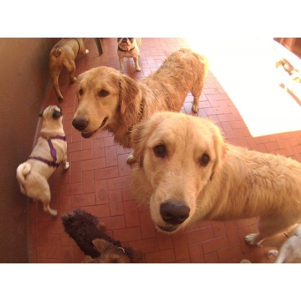 Contratar Serviços de Daycare Canino na Vila Almeida - Dog Care