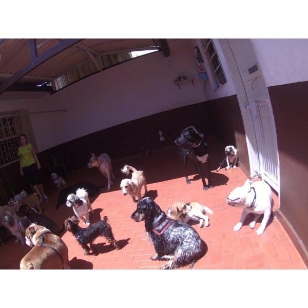 Day Care Cachorro na Vila Guaianases - Serviço de Daycare Canino