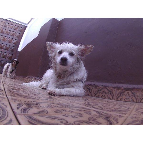 Day Care Canino Contratar no Bairro Jardim - Day Care Canino