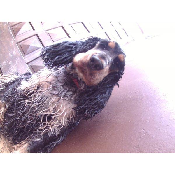 Day Care Canino Preços no Jardim São Savério - Serviço de Daycare para Cachorros