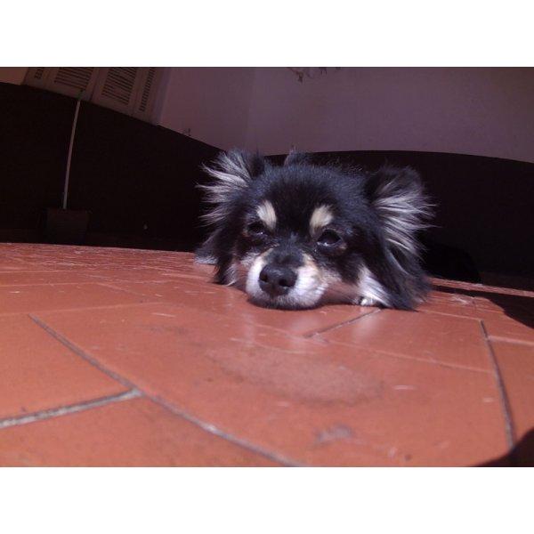 Day Care Canino Quanto Custa em Média no Jardim Oriental - Day Care Dogs