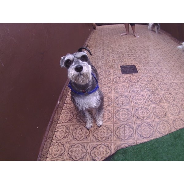 Day Care Canino Valor na Vila Bastos - Dog Care
