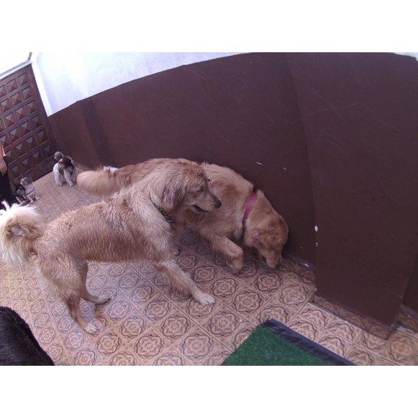 Day Care Canino Valores no Jardim Cordeiro - Day Care Dogs