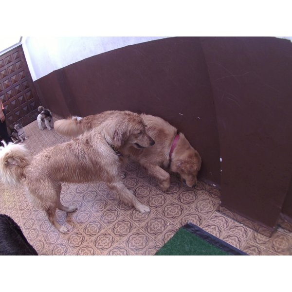 Day Care Canino Valores no Jardim Santa Cristina - Day Care Canino