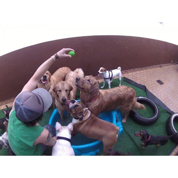 Daycare Cachorro com Valor Bom em City Butantã - Dog Care