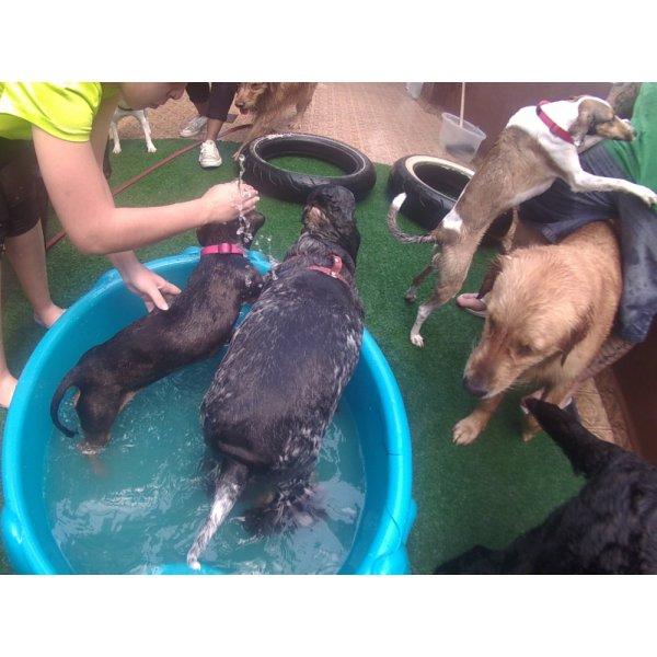 Daycare Cachorro Contratar na Vila Arapuã - Serviço de Daycare Canino