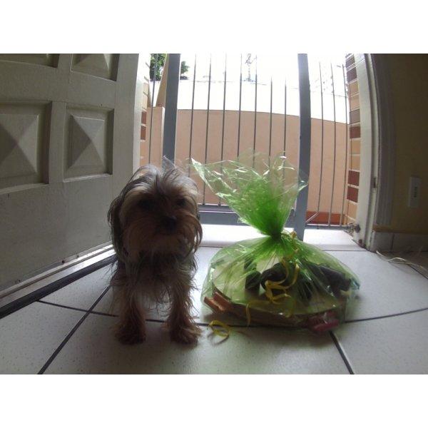 Daycare Cachorro Contratar na Vila Príncipe de Gales - Dog Care