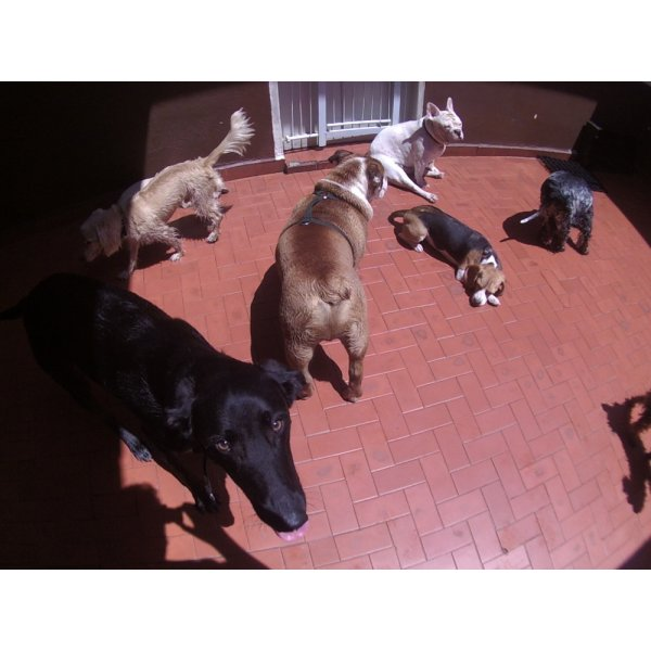 Daycare Cachorro na Chácara Itaim - Serviço de Daycare Canino