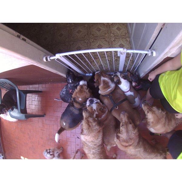Daycare Cachorro Preço na Vila Canaã - Serviço de Daycare Canino