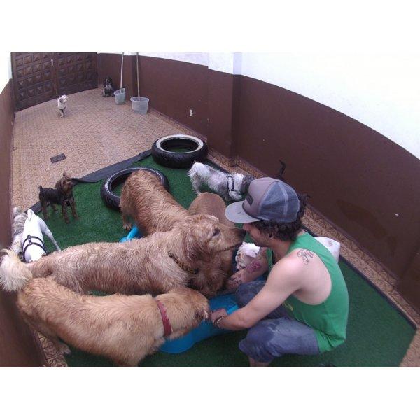 Daycare Cachorro Quanto Custa no Higienópolis - Serviço de Daycare Canino