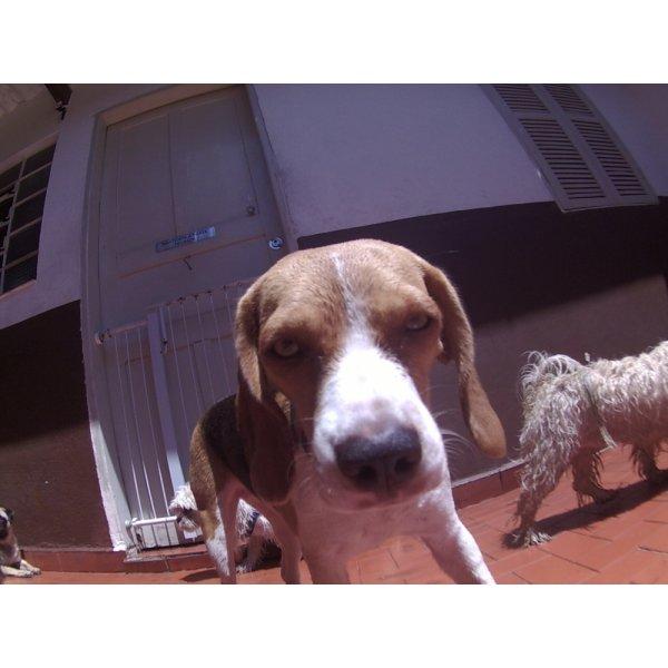 Daycare Cachorro Valores na Pinheirinho - Serviço de Daycare Canino