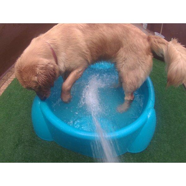 Daycare Cão na Vila Cordeiro - Serviço de Daycare Canino
