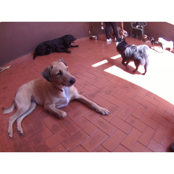 Daycare Pet na Vila Alice - Dog Care em Santa Maria