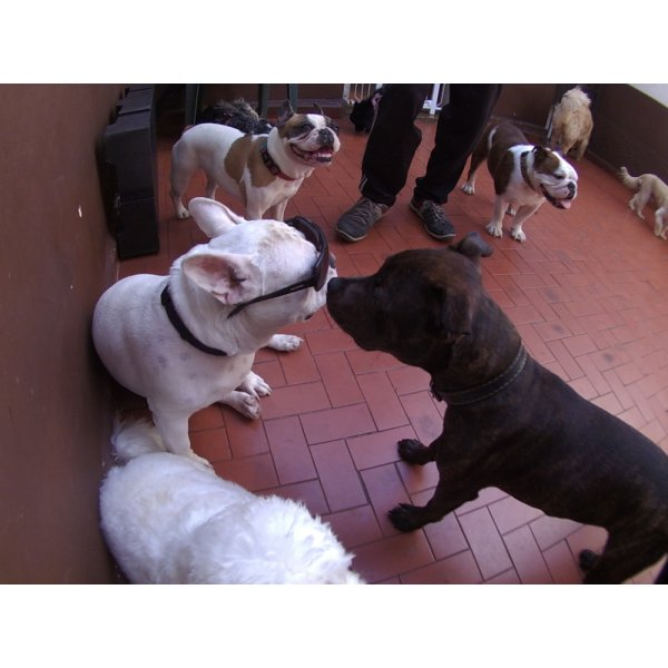 Daycare Pet Onde Encontro na Vila Alpina - Daycare Dogs