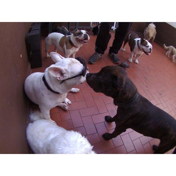 Daycare Pet Onde Encontro no Jardim Renata - Daycare para Cães