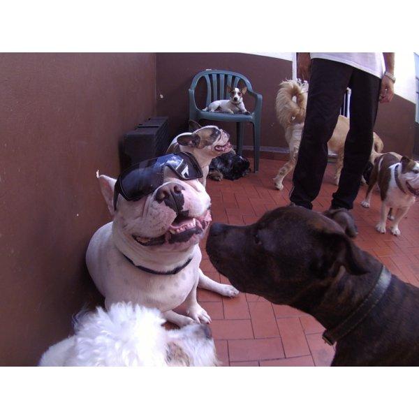 Daycare Pet Onde Tem na Chácara Lane - Daycare para Cães