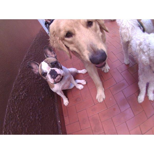 Daycare Pet Preços no Jardim Cambuí - Dog Care em Santa Maria