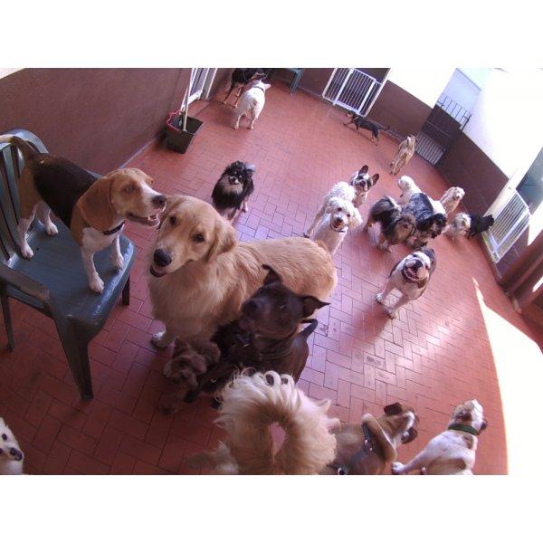 Daycare Pet Quanto Custa em Média no Jardim Leônidas Moreira - Daycare para Cães