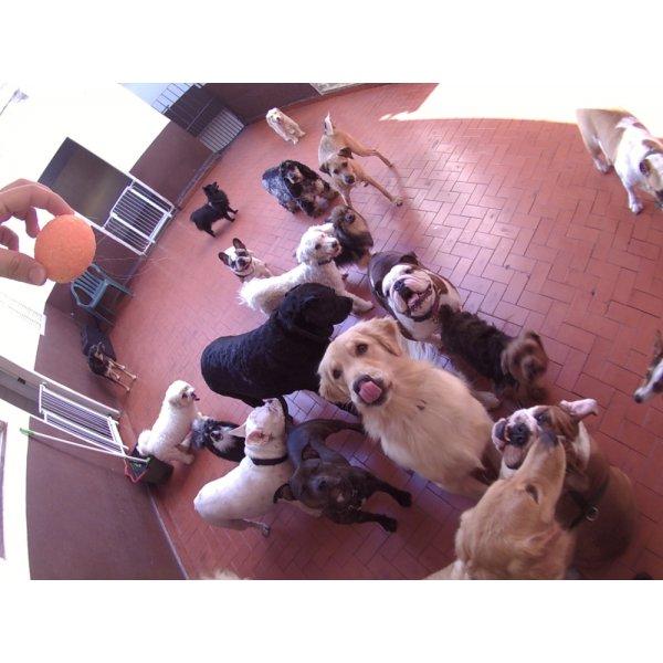 Daycare Pet Quanto Custa na Vila Ida - Daycare para Cães