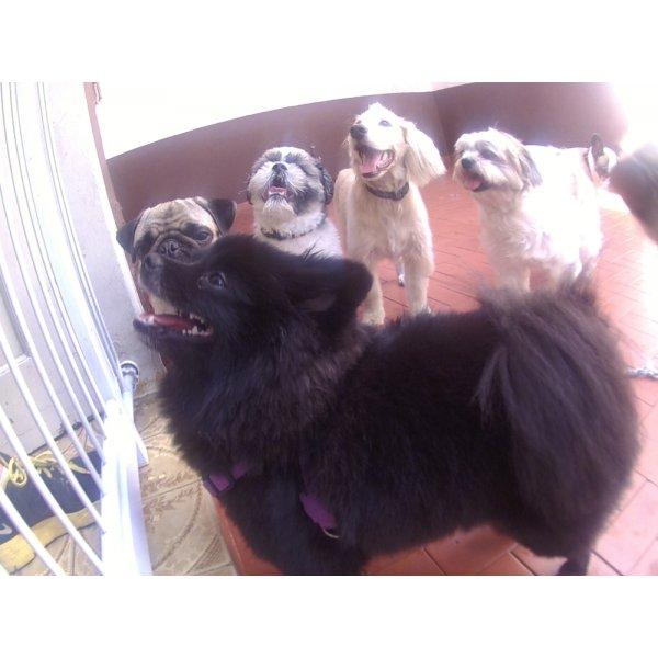 Daycare Pets no Bosque da Saúde - Serviço de Daycare Canino