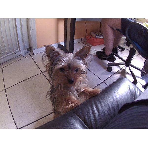 Daycare Pets Preços no Jardim Vila Rica - Dog Care em Santa Maria