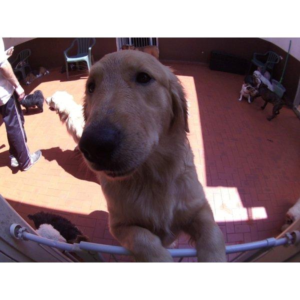 Dog Care com Valor Baixo em Prosperidade - Dog Care em Santa Maria