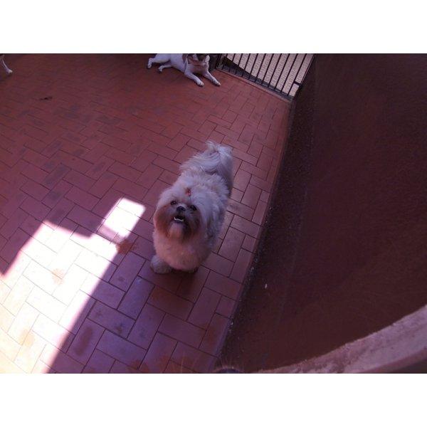 Dog Care Contratar no Jardim Textília - Dog Care em Santa Maria