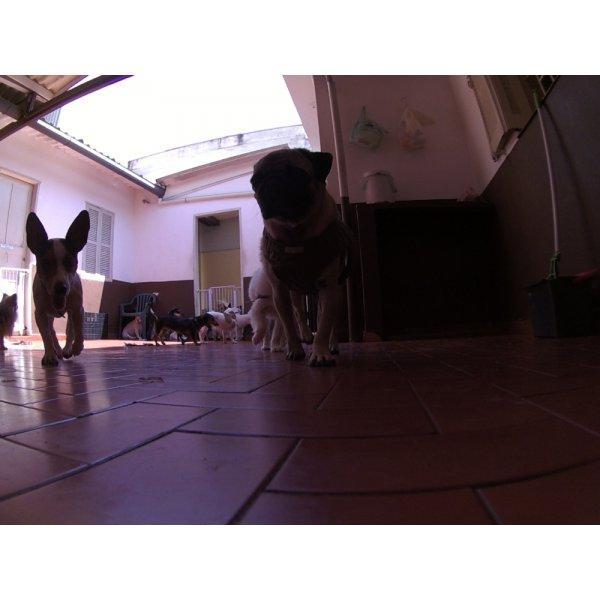 Dog Care em São Caetano do Sul - Dog Care em Santa Maria