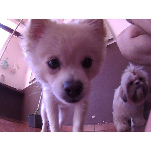 Dog Care Preço na Chácara Klabin - Dog Care em Santa Maria