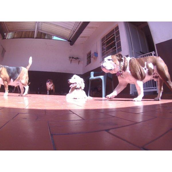 Dog Care Quanto Custa em Média na Cidade Monções - Dog Care em Santa Maria