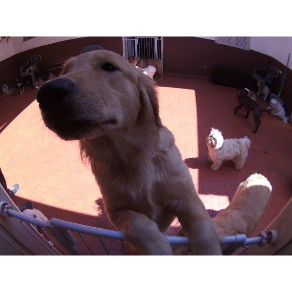 Dog Care Valores na Chácara Flora - Dog Care em Santa Maria