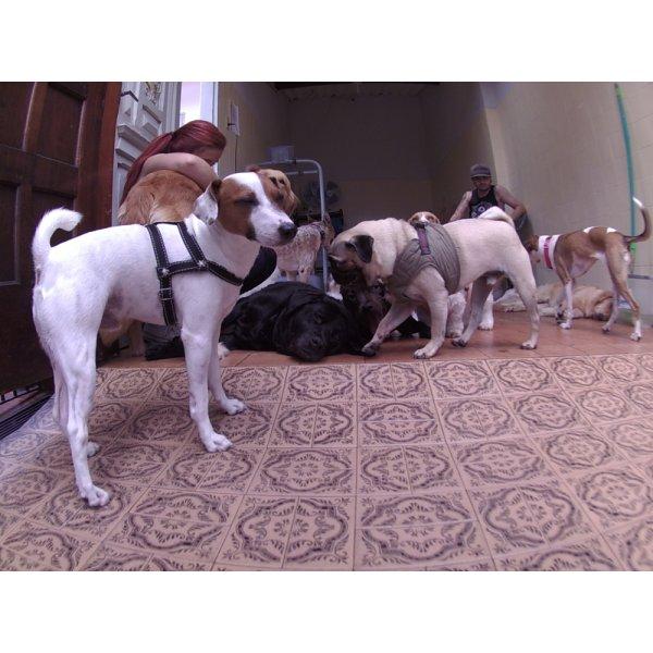 Dog Sitter Contratar no Jardim Pinheiros - Babá de Cachorro