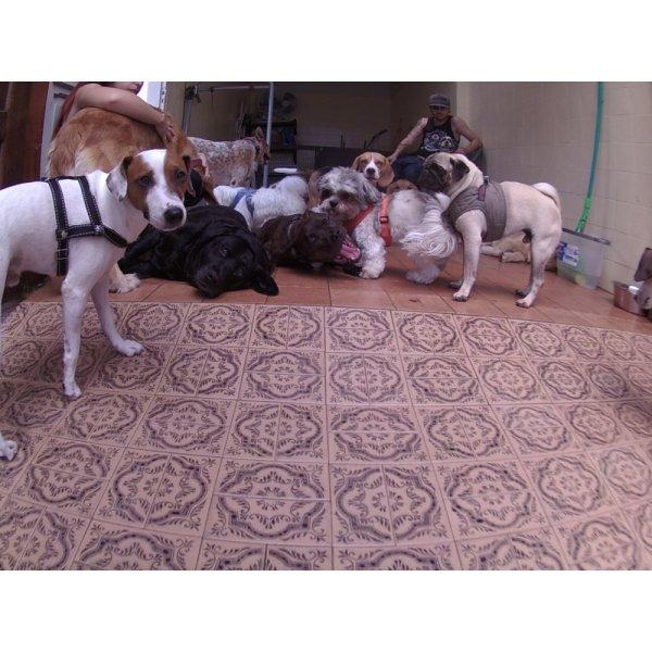 Dog Sitter em São José - Empresa de Dog Sitter