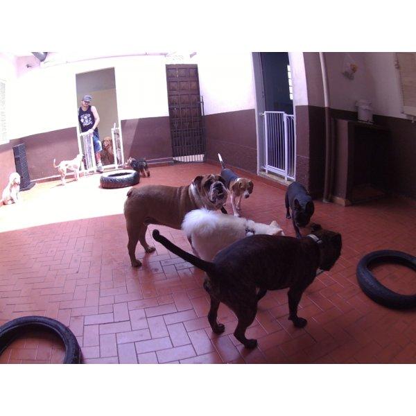 Dog Sitter Onde Encontrar na Chácara Japonesa - Babá de Cachorro