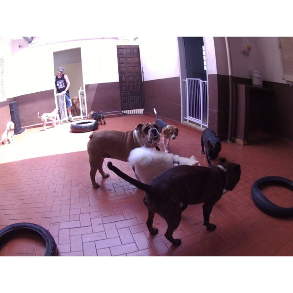 Dog Sitter Onde Encontrar na Vila Marte - Babá para Cães