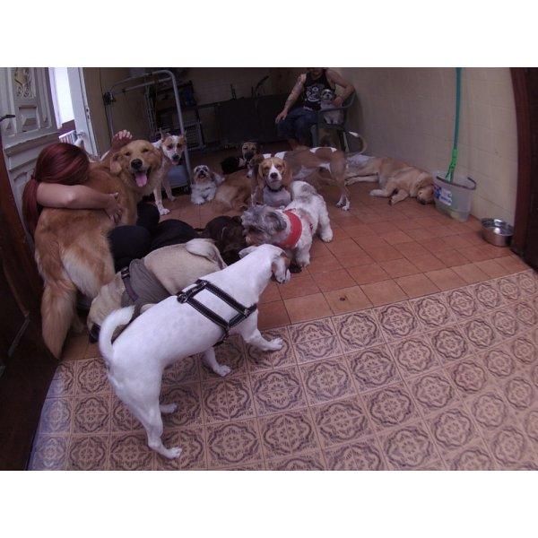 Dog Sitter Onde Tem no Jardim Bela Vista - Babá de Cachorro