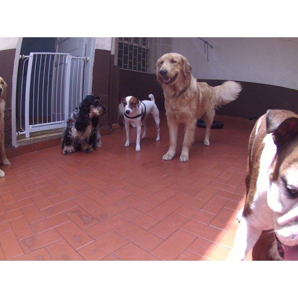 Dog Sitter Preço na Luz - Dog Sitter em São Bernardo