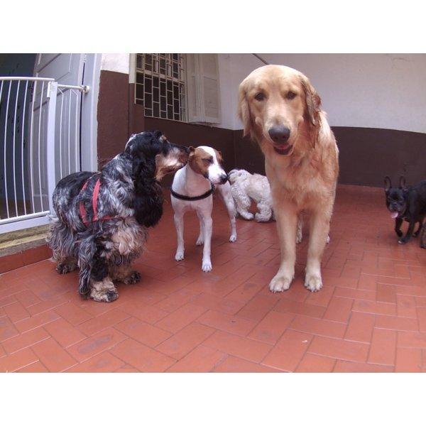 Dog Sitter Qual Empresa Oferece na Ponte Pequena - Dog Sitter em São Bernardo