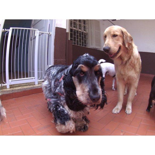 Dog Sitter Qual Empresa Tem no Jardim Cambuí - Dog Sitter em São Bernardo