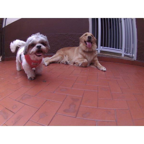 Dog Sitter Quanto Custa em Média no Jardim Amália - Babá para Cães