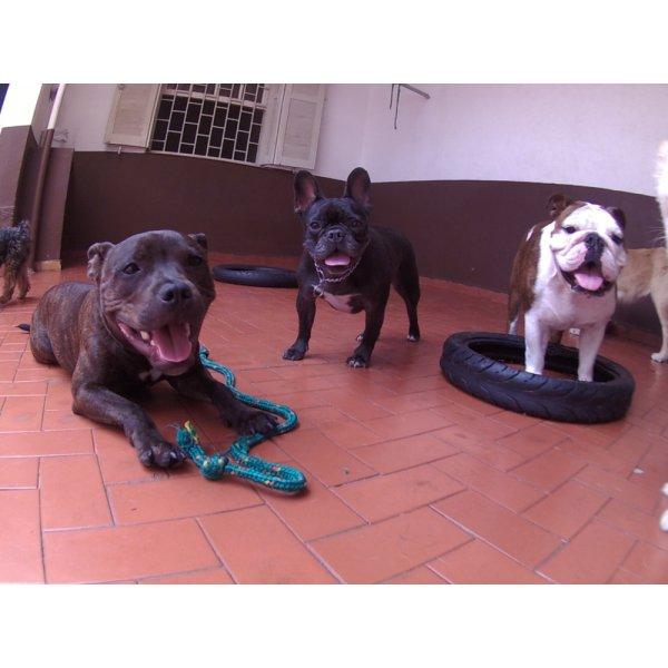 Dog Sitter Valor no Caxingui - Dog Sitter em São Bernardo