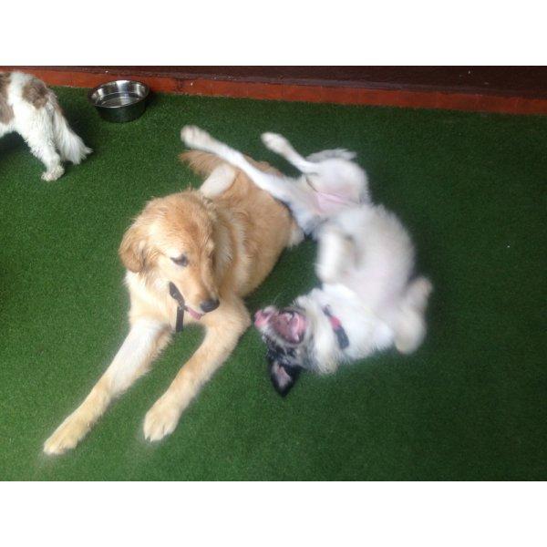 Dog Walker com Valor Bom na Santa Cruz - Serviço de Dog Walker Preço