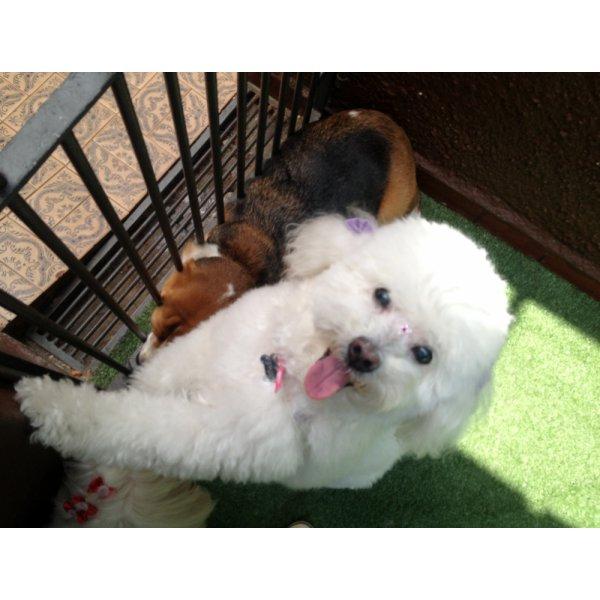 Dog Walker no Parque das Nações - Pet Walker Preço