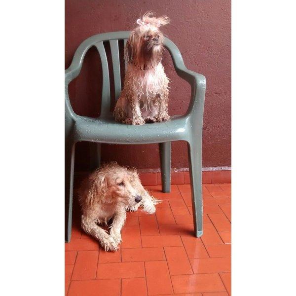 Dogsitter Valor no Itaim Bibi - Babá de Cachorro