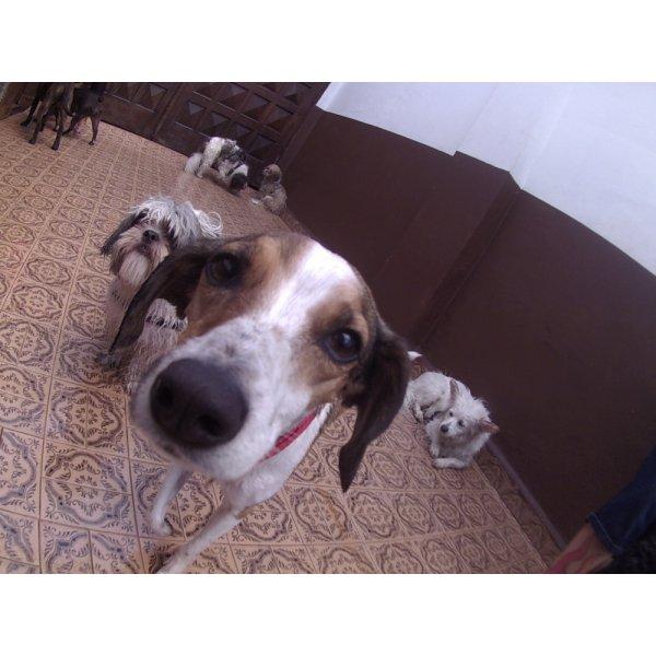 Empresa Day Care Canino no Jardim Vila Rica - Day Care para Cães