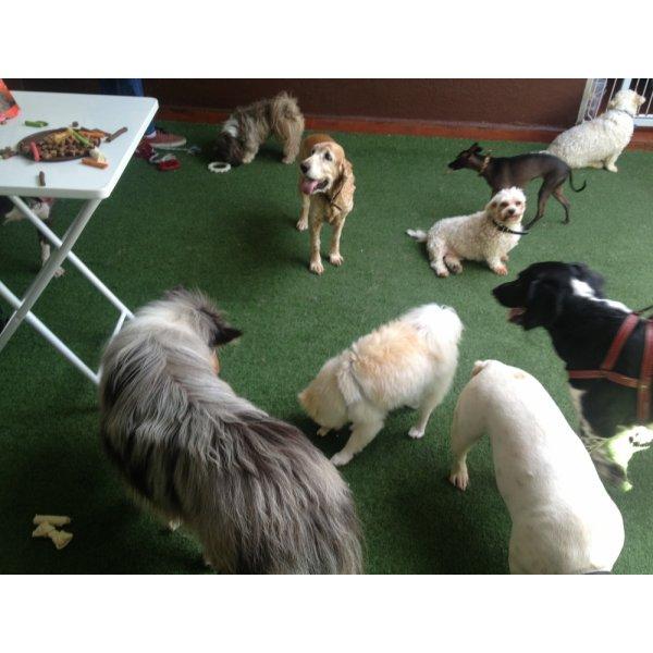 Empresa de Adestradores Contratar no Jardim Irene - Adestrador de Cães em São Bernardo