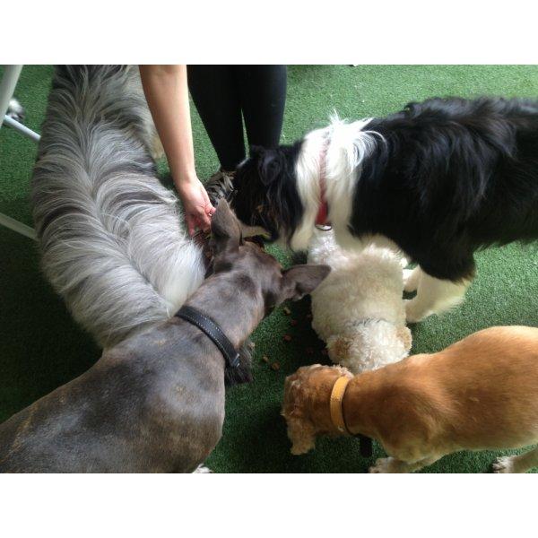 Empresa de Adestradores de Cães Contratar no Jardim Celeste - Adestrador de Cães em São Bernardo