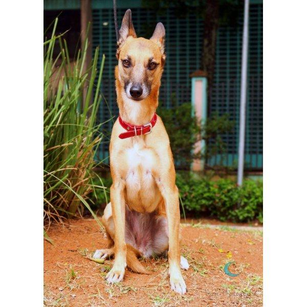Empresa de Adestradores de Cães no Parque Bristol - Adestrador de Cães em São Bernardo
