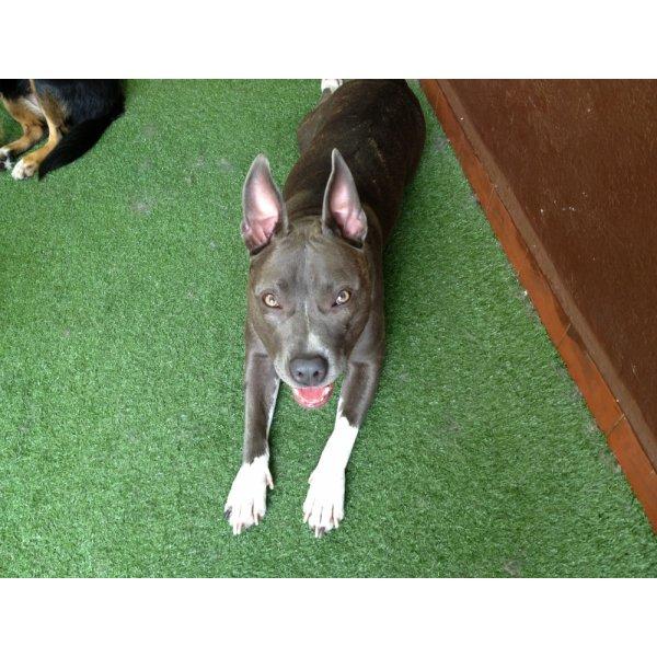 Empresa de Adestradores de Cães Preço em Homero Thon - Adestrador de Cães em São Bernardo